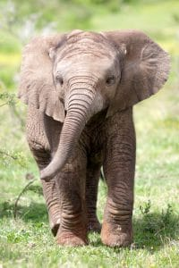 Plan Big Fun This Summer at the Fort Worth Zoo!
