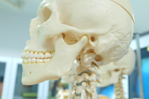 jaw joint